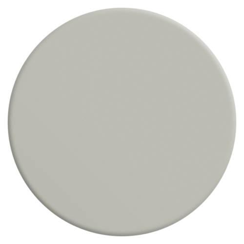 gris-pleurotte